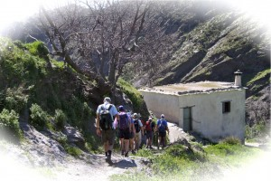 Spring 2015 guided walks